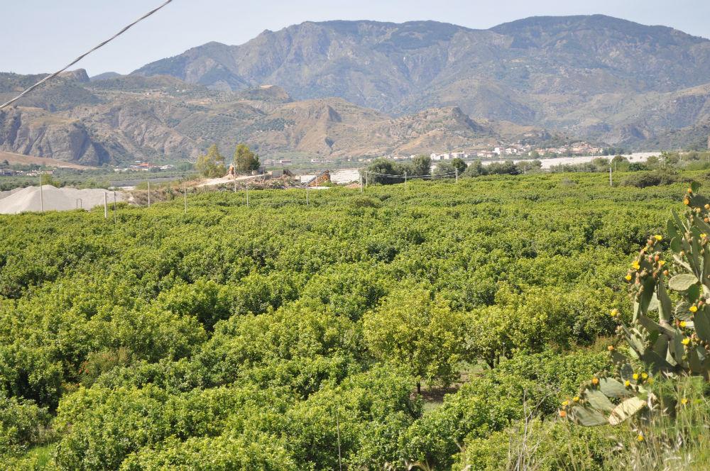 Calabria segreta, tra stocco e bergamotto