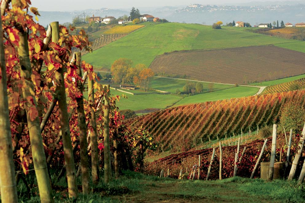 Venti cose da non perdersi nel Monferrato