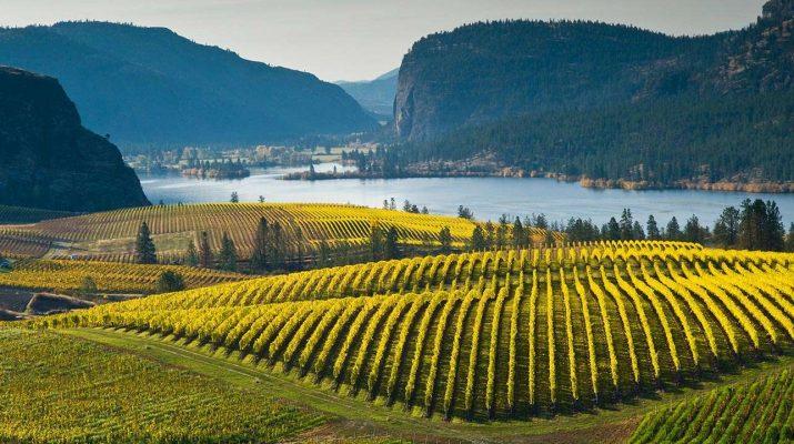 Foto Ecco le vigne più belle del mondo