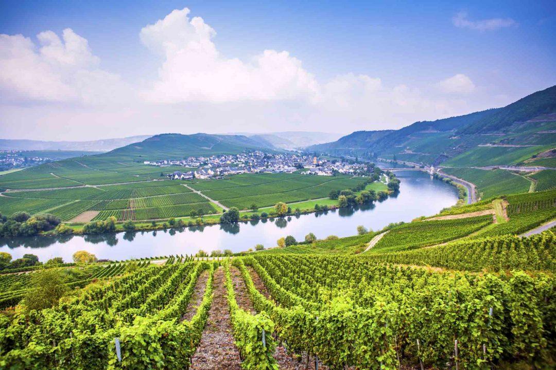Ecco le vigne più belle del mondo