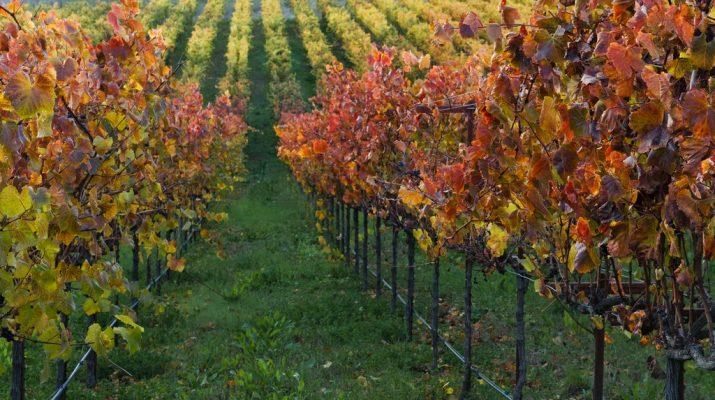 Foto Foliage: il bello dell'autunno (in 30 foto)