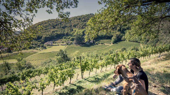 Foto Cantine e vigne: settembre in Franciacorta