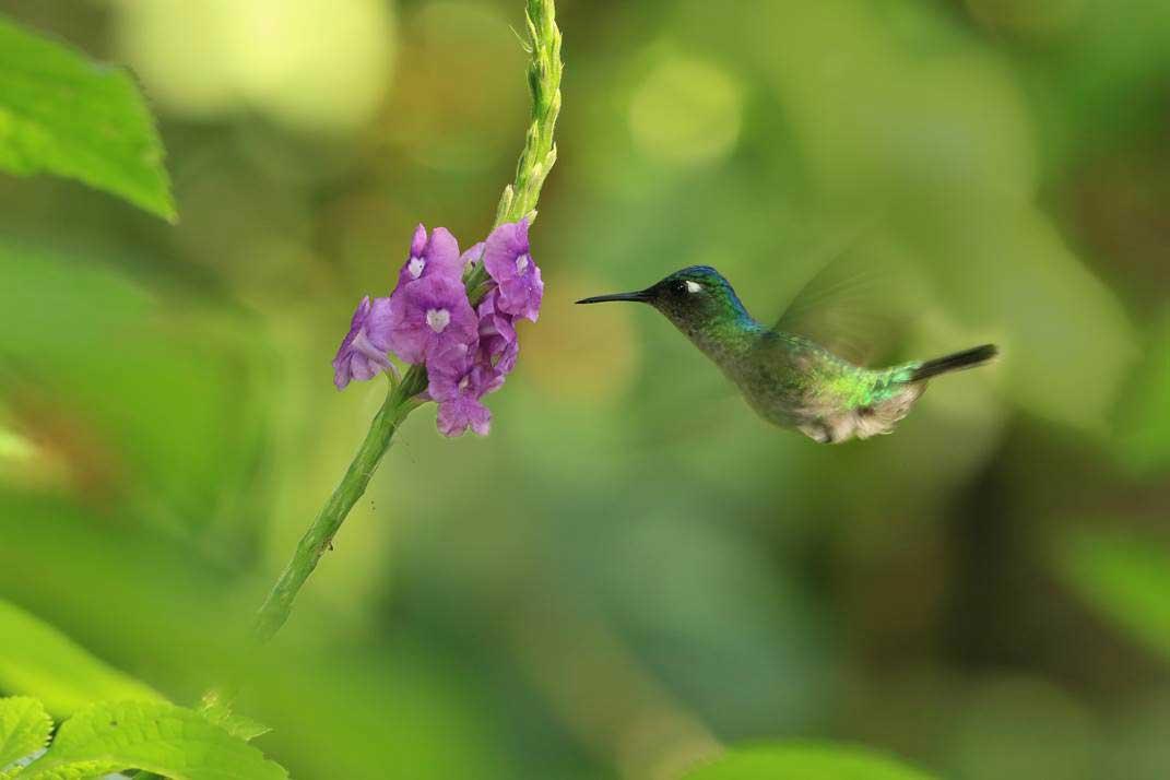 Costa Rica: full immersion nella natura