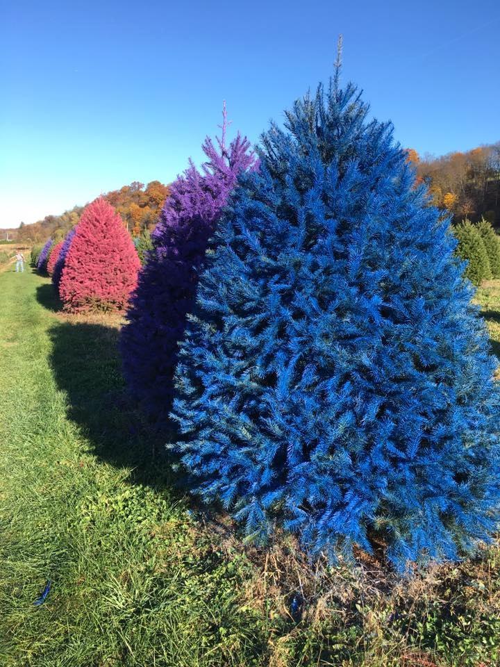 Gli alberi di Natale più sorprendenti in giro per il mondo