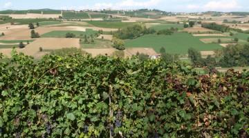12_Monferrato_Luca_Sartori