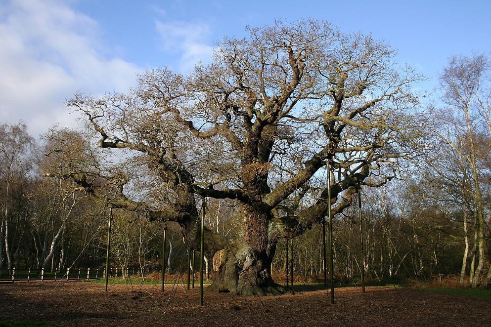I 20 alberi più famosi del mondo