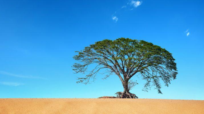 Foto I 20 alberi più famosi del mondo