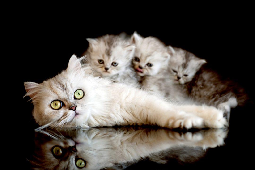 Il gatto, protagonista dei proverbi di tutto il mondo