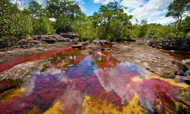 """Caño Cristales, un """"arcobalento liquido"""""""