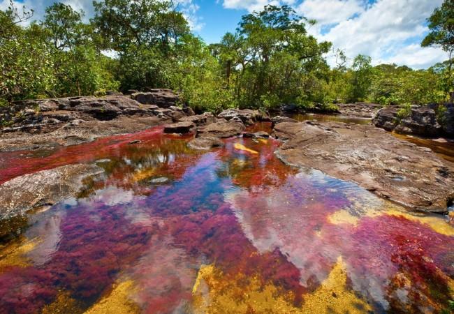 Ca o cristales il fiume pi bello del mondo dove viaggi - Cristales para piscinas ...