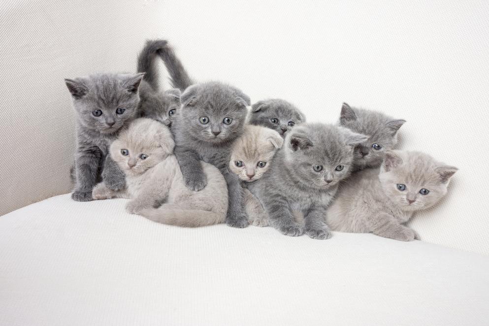 17 febbraio 2021: la Festa nazionale del gatto in 25 proverbi da tutto il mondo