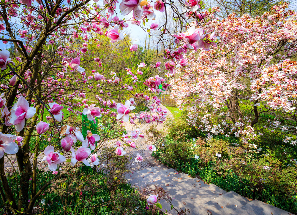 Fioriture: al via lo show di primavera