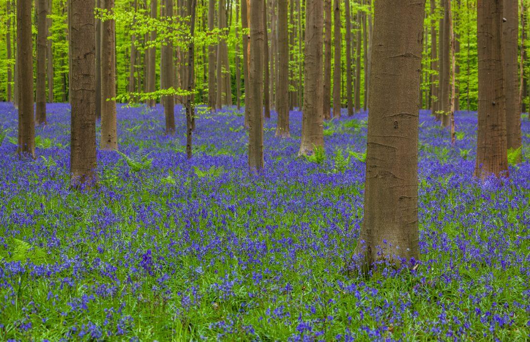 Le più belle foreste del mondo