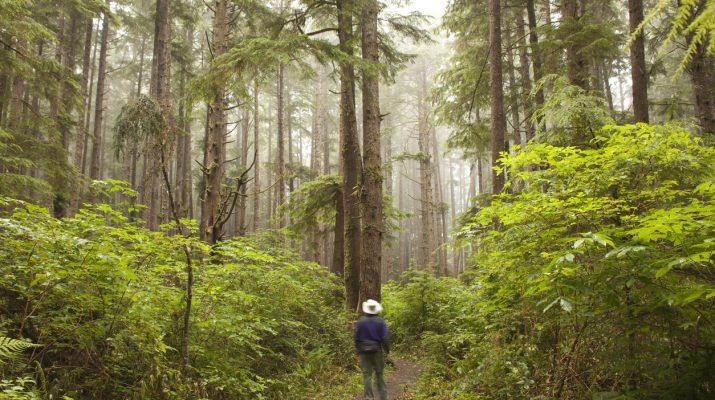 Foto Le foreste più belle del mondo