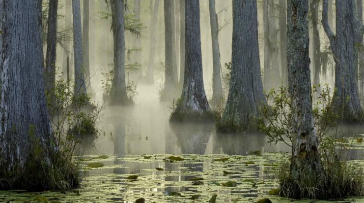 Foto Perdersi nei boschi più belli del mondo
