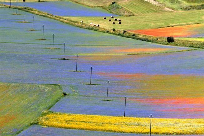 La fioritura della lenticchia Igp di Castelluccio di Norcia richiama, ogni estate, migliaia di turisti.