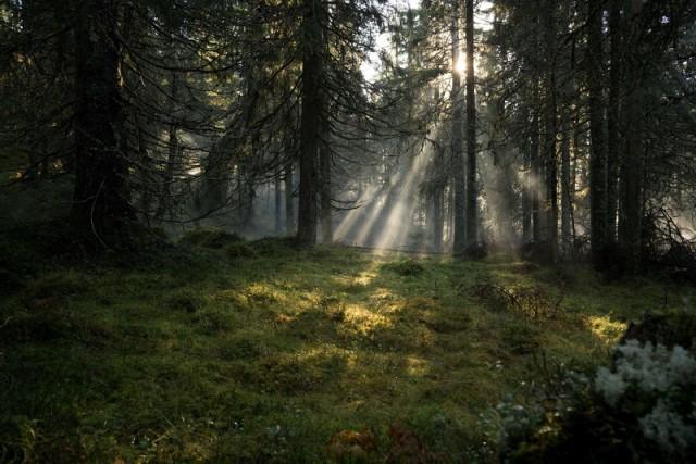 """""""Rifugio rustico nella foresta in stile vintage"""", è la descrizione di questa foresta, """"Båtstadknallen"""", nel Värmland occidentale"""