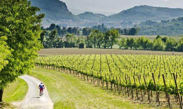 Nell'ambito di Aspettando il Festival d'Estate, nel weekend dal 10 all'11 giugno ci si dedicaallo sport, partecipando aescursioni a piedi e in bicicletta con tappa in cantina.