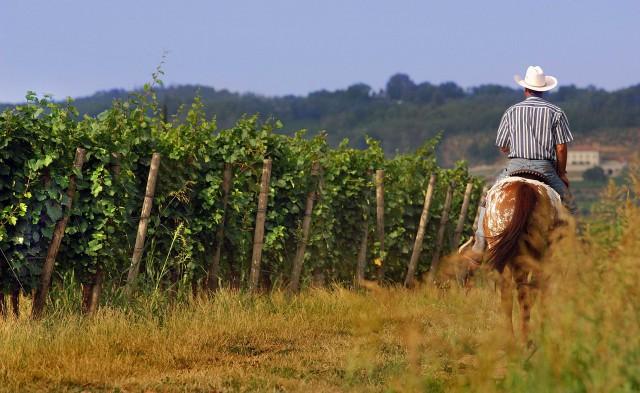 A cavallo tra le vigne della Franciacorta.