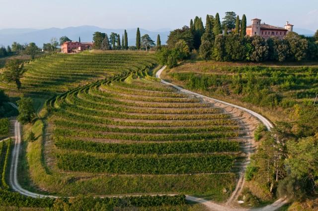 Rocca Bernarda domina dall'alto una distesa di vigneti:è infatti una delle più antiche realtà vitivinicole del Friuli Venezia Giulia.