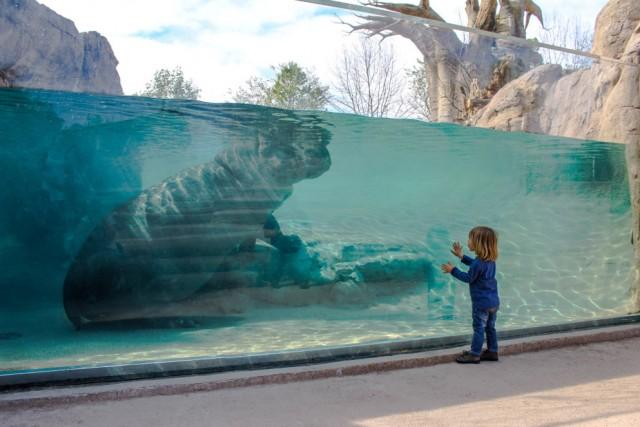 """Torino, Zoom  Il Bio parco di Cumiana, in provincia di Torino, è sicuramente un posto magico per una giornata in famiglia. Tantissimi animali esotici da ammirare, un nuovo habitat (Malawi Beach), dedicato all'esperienza con i pesci tropicali e a una visione subacquea degli ippopotami, e la spiaggetta artificiale """"Bolder Beach"""", con la piscina in cui nuotare fianco a fianco con i pinguini, che sguazzano nella vasca lì accanto. Info: zoomtorino.it"""