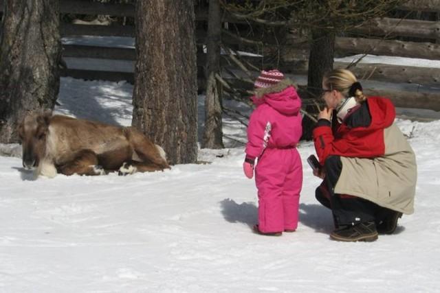 Croda Rossa, a spasso con le renne Sarà il fascino legato a Babbo Natale, ma le renne sono amatissime dai bambini. Incredibilmente, non è necessario andare fino in Scandinavia per vederle da vicino: in Sud Tirolo c'è infatti un'area (unica in Italia) dove vive una colonia di questi mammiferi nordici. Info:suedtirolerland.it