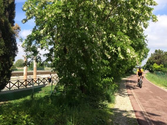 A Aquileia la ciclabile corre accanto alle rovine del foro romano.