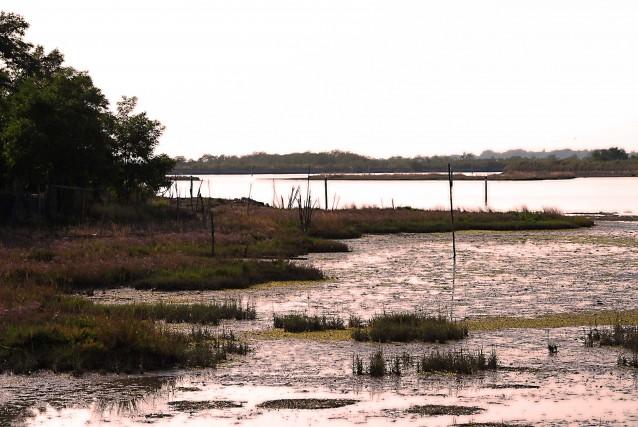 Nella laguna di Grado il blu del mare incontra il verde della vegetazione: olmi, tamerici, pini, pioppi, ginepri ospitano gabbiani, aironi cinerini, germani reali, rondini di mare.