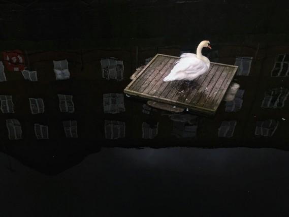 "Categoria ""Animali"": secondo posto per Dongrui Yu (Yunnan, Cina)"