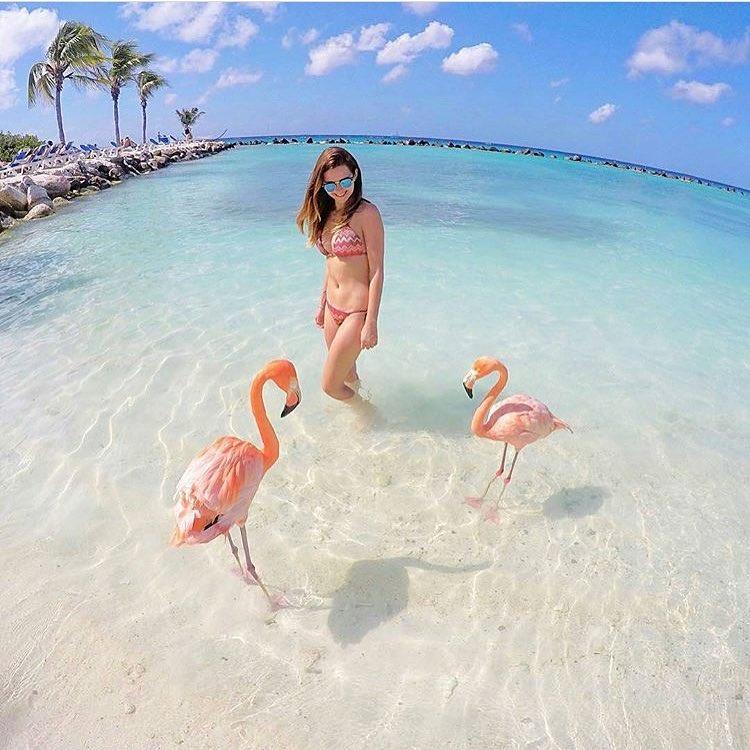 Tutti pazzi per i fenicotteri rosa a Flamingo Beach nei Caraibi