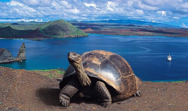 Il naturalista Charles Darwin approdò per la prima volta nell'arcipelago delle Galápagos nel settembre di 182 anni fa e ne rimase affascinato. Questo insieme di 14 isole possiede infatti un habitat naturale che ha davvero pochi uguali sul resto della Terra
