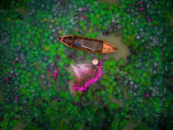 """Una donna raccoglie dei giacinti d'acqua vicino al delta del Mekong, in Vietnam. Lo scatto ha vinto il secondo premio nella categoria """"Persone"""""""