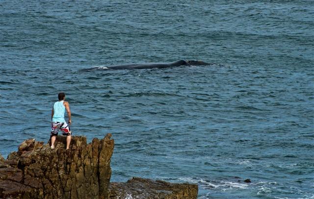 Whale watching a Hermanus, dove le balene si avvistano anche dalle scogliere, o dalle terrazze e dalle finestre dell'Ocean Eleven Hotel: lusso a picco sull'oceano.