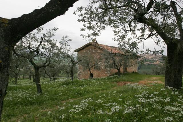 Trevi è circondata dagli uliveti. Per scoprire quest'angolo incantevole di Umbria, si percorreil Sentiero degli Ulivi, che collega Assisi e Spoleto.