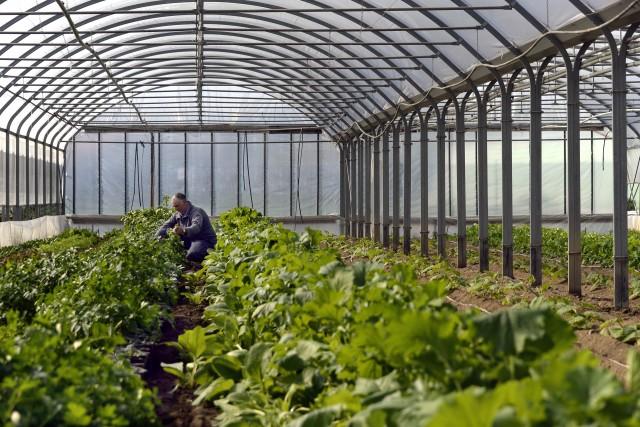 L'Azienda Agricola Gerolamo Banchero. Qui, verdure a metro zero con spacciovicinissimo ai campi. Da provare i carciofi di Albenga.