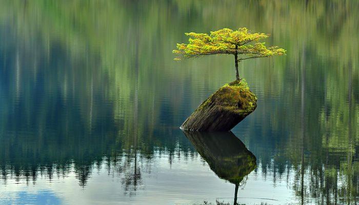Foto Giornata nazionale degli alberi: quegli eroi resilienti che resistono ovunque