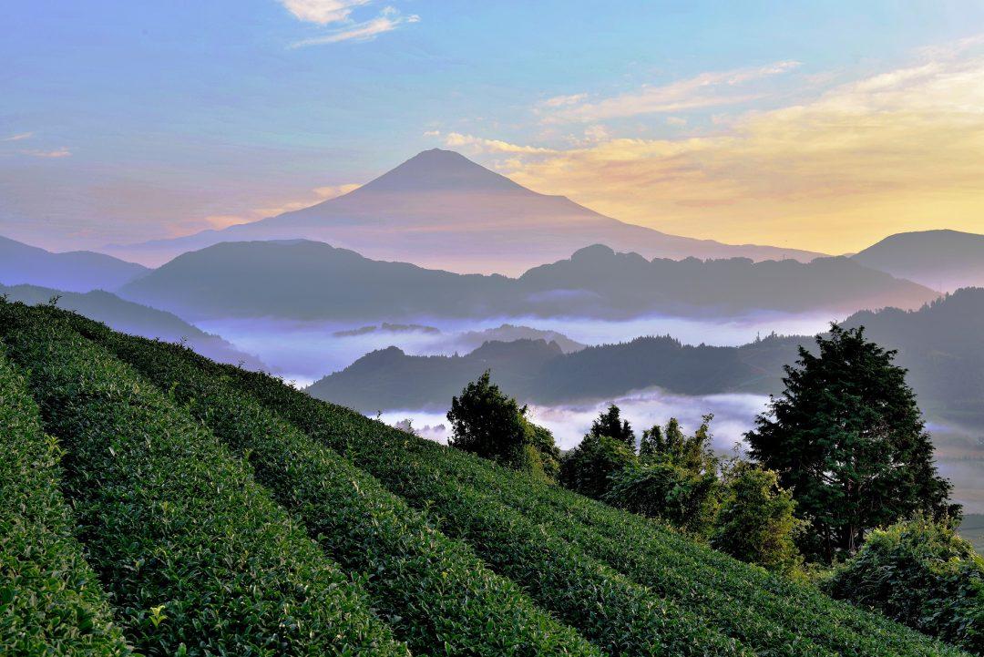 In Giappone, nella valle del tè verde