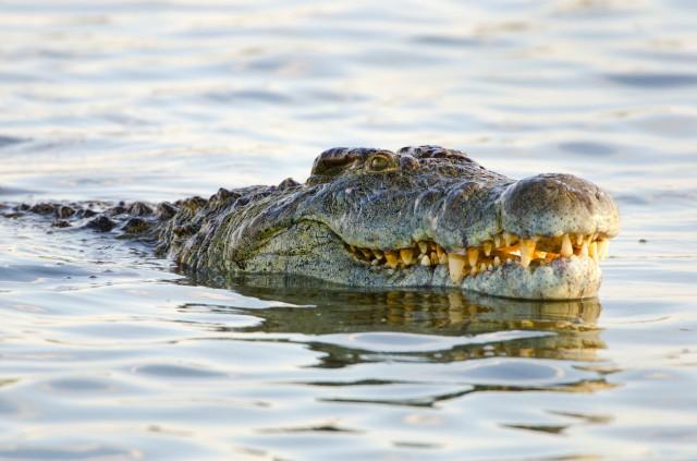 Le acque più pericolose al mondo dove nuotare