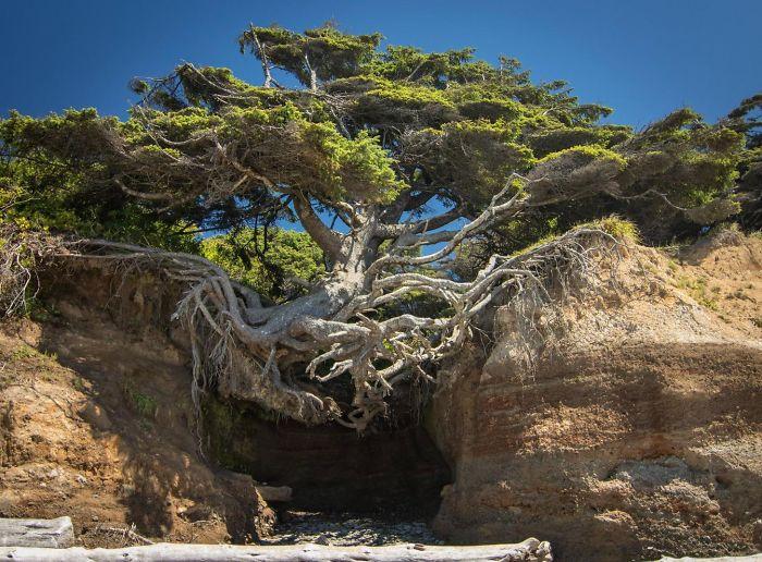 Giornata nazionale degli alberi: quegli eroi resilienti che resistono ovunque