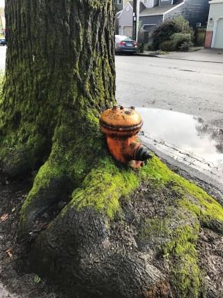 Gli alberi che si rifiutano di morire