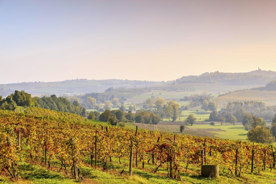 Alla scoperta del Monferrato: vini, grappe e wellness