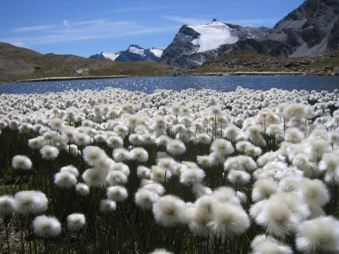 A piedi tra le nuvole: Gran Paradiso senza smog
