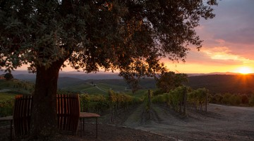 Cdb_Capanna-vineyard