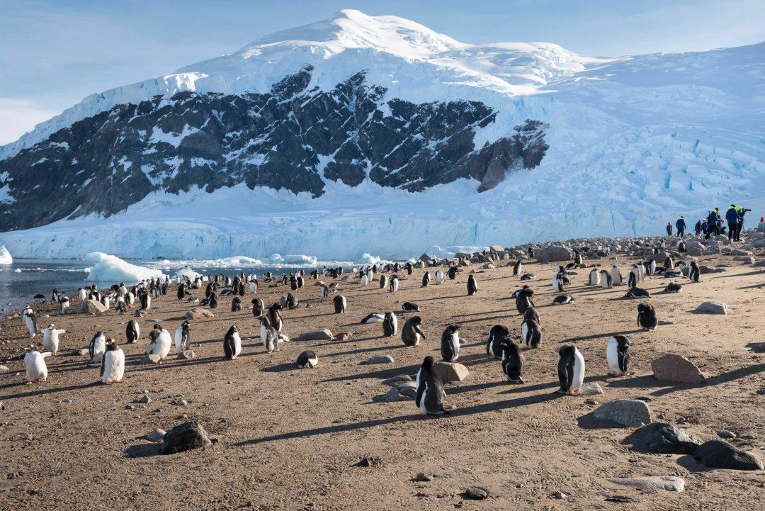 Antartide: in crociera tra pinguini e balene