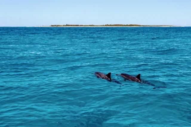 Delfini attorno all'Île des Pins.