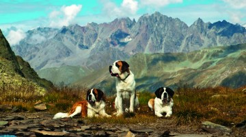 L'abbraccio della Valle d'Aosta, su