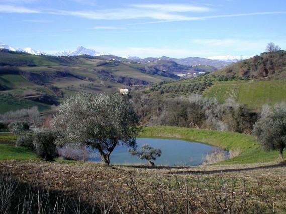 L'Associazione NazionaleCittà dell'Olio ha organizzato la prima giornata dedicata alle camminate tra gli ulivi: si terrà il prossimo 29 ottobre, in tutta Italia.
