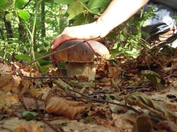 Nel Parco nazionale dell'Appennino Tosco-Emiliano, il paese di Cerreto Laghi èprotagonistadel Campionato Mondiale del Fungo: al posto dei maratoneti, ci sono i cercatori di funghi che competono per vincere la gara.