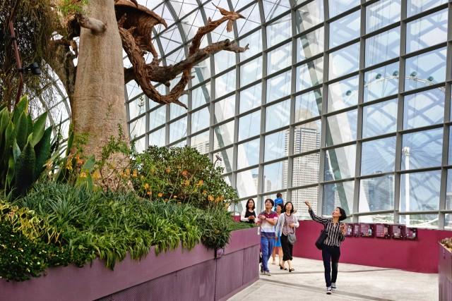 Si passeggia tra le serre dei Gardens by the Bay, uno dei simboli dellaSingapore più innovativa.