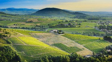 Brouilly hill and vineyards with morning lights in Beaujolais land